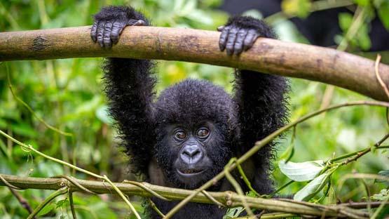 GorillaBlog1.jpg