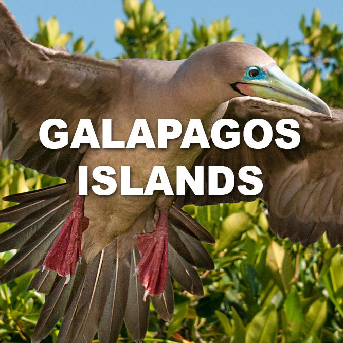GalapagosIslands621.jpg