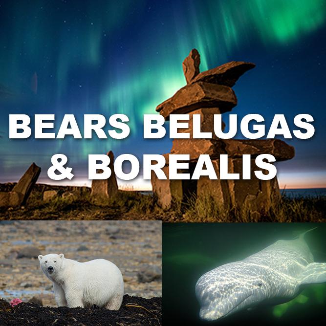 BearsBelugasBorealis921.jpg